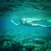 Snorkeling in Great Barrier Reef